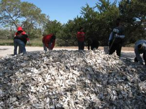 NCSU Students Bagging Oyster Shells