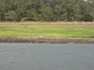 Hunting Island, SC Shoreline