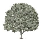 iStock_money tree
